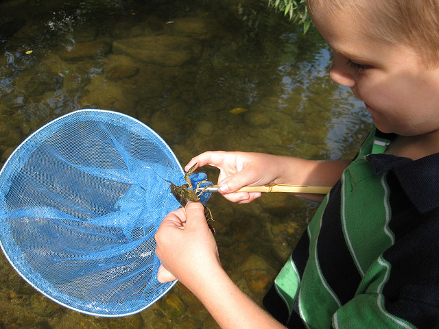 Don't forget the nets to find treasures in the creek!